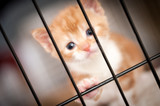 sad face of a kitten behind the bars of a cage
