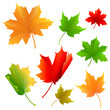 vector illustration of colorful maple leaf