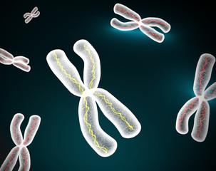 Cromosomas X