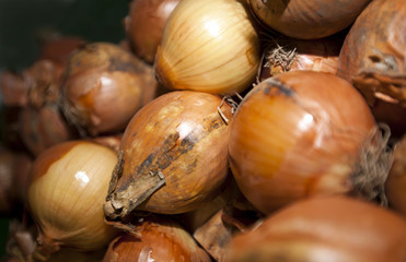 Close-up of onions in supermarket