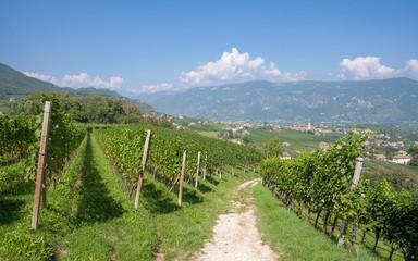der bekannte Weinort Eppan an der Südtiroler Weinstrasse