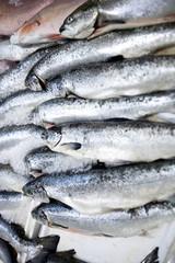 Full frame shot of freshly caught fishes