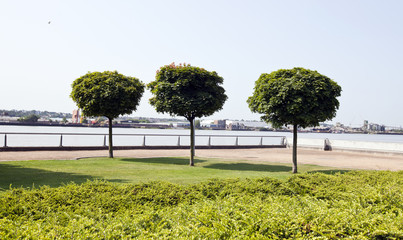 Three trees planted by river in city