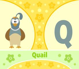 The English alphabet  with Quail