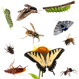 Collection of insects. Butterflies, caterpillars,
