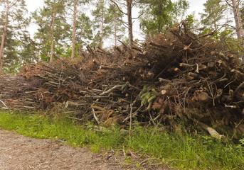 Wood after deforestation