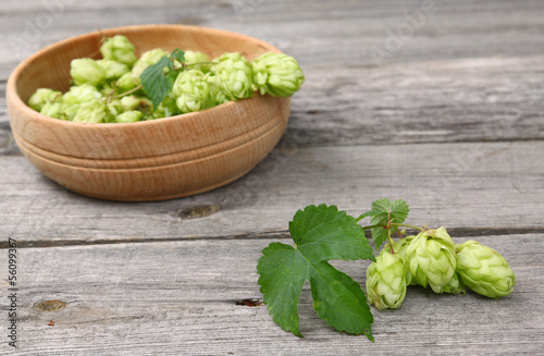 A  branch of hops