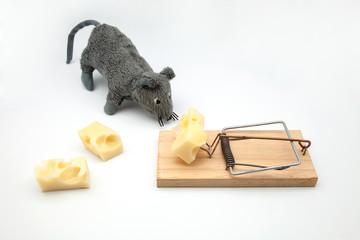 raton queso trampa