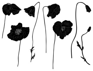 set of poppy silhouettes isolated on white