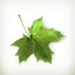 Maple leaf, green