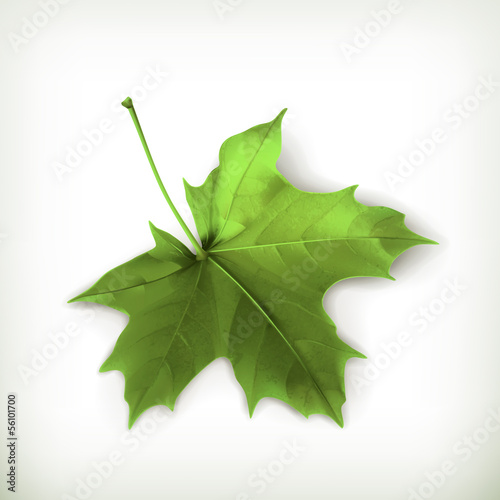 Maple leaf, green