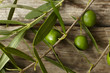 olive branch on the wooden table