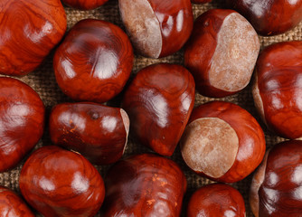 Background of sweet chestnuts