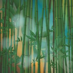 Portada Bambu