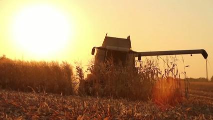 Combine Harvesting Corn HD