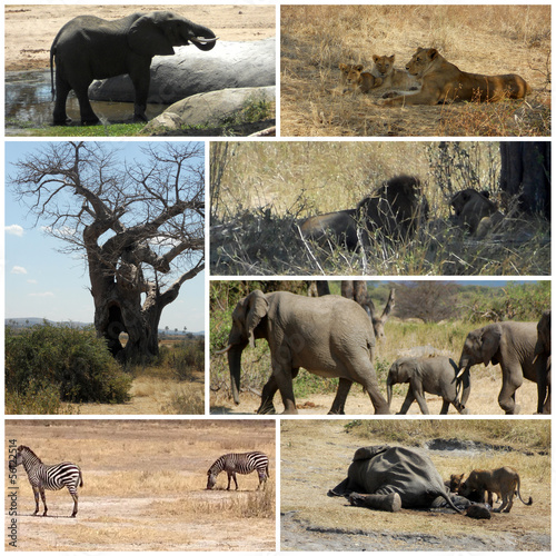Images from savanna - Tanzania - Africa