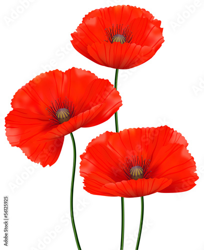Red poppies isolated © belkatt