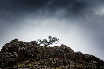 Pine tree growing on rock cliff