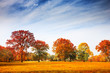 Autumn trees landscape, fall season - 56126587