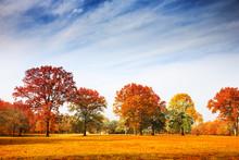 """Постер, картина, фотообои """"Autumn trees landscape, fall season"""""""