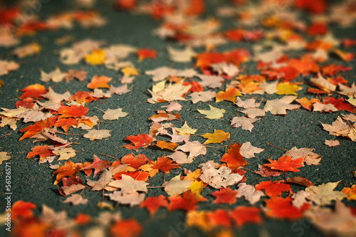 Red and yellow Autumn leaves on asphalt background