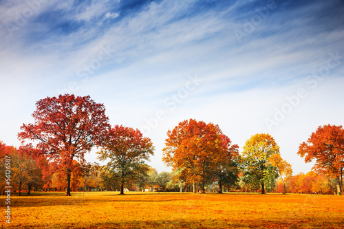 Leinwandbild Motiv Autumn trees landscape, fall season
