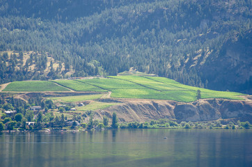 Vineyards overlooking Skaha Lake in British Columbia
