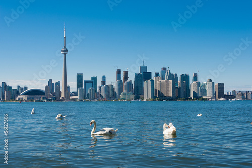 Toronto skyline with swans