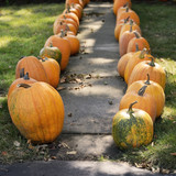 Large Pumpkins Along A Sidewalk