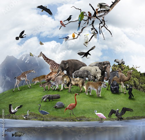 Foto op Canvas Neushoorn A Collage Of Wild Animals And Birds