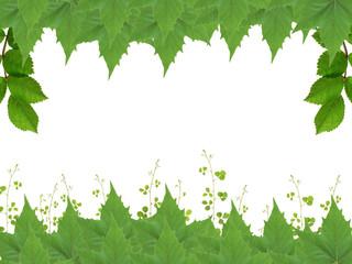 Moldura de Folhas
