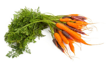 red and orange carrots isolated on white
