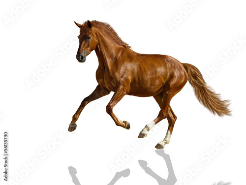Deurstickers Paarden Chestnut horse.