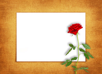 horizontal old blank card with a single red rose