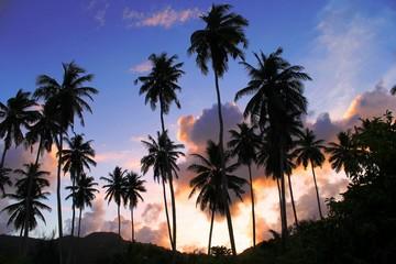 cocotiers coucher de soleil