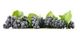 Kiście czerwonych winogron - 56141146