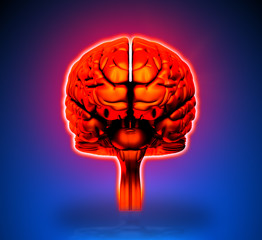 Brain - Internal organs - blue background