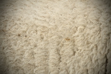 white sheep fur with vignette