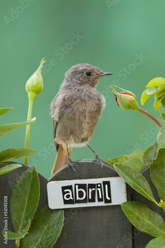 Bird perched on a April decorated fence