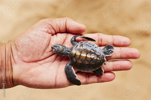 Newborn of turtle
