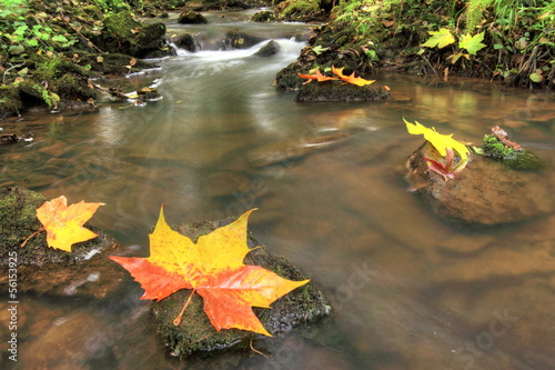 belle saison d'automne