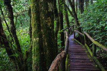 Wood footpath in tropical rain forest