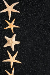 Sea stars lie in a row with
