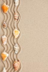Stripe of seashells lying on the sand