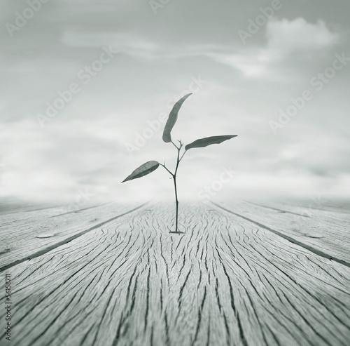 Grow - 56158711