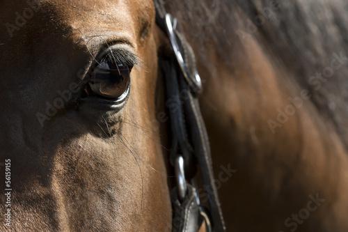 Auge eines braunen Pferdes