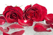 Red roses and petals with water drops