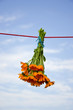medical herb calendula  flowers bunch hanging on string