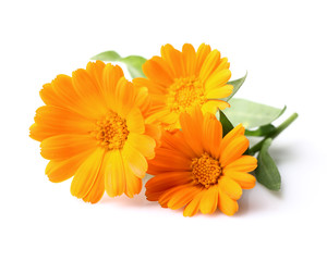 Beauty marigold