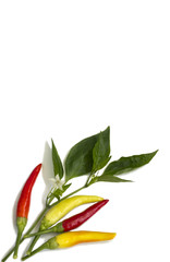 Hot peppers of different colors